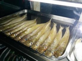 Lady Fish(Nogli,Kane)
